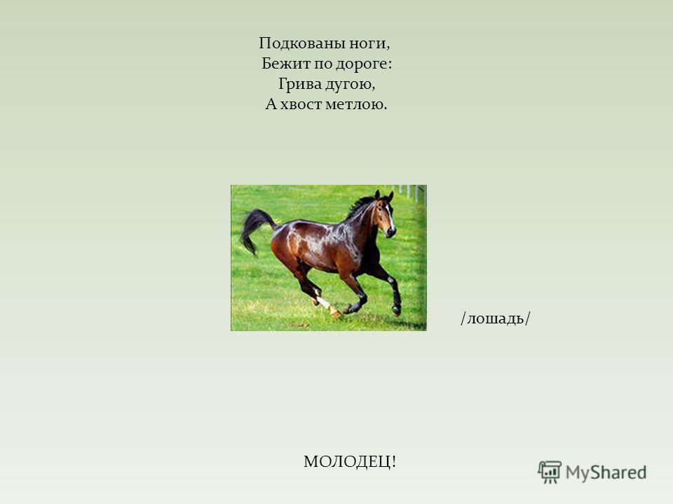 Подкованы ноги, Бежит по дороге: Грива дугою, А хвост метлою. /лошадь/ МОЛОДЕЦ!