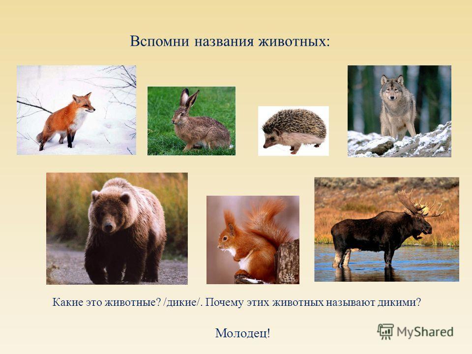 Вспомни названия животных : Какие это животные ? / дикие /. Почему этих животных называют дикими ? Молодец !