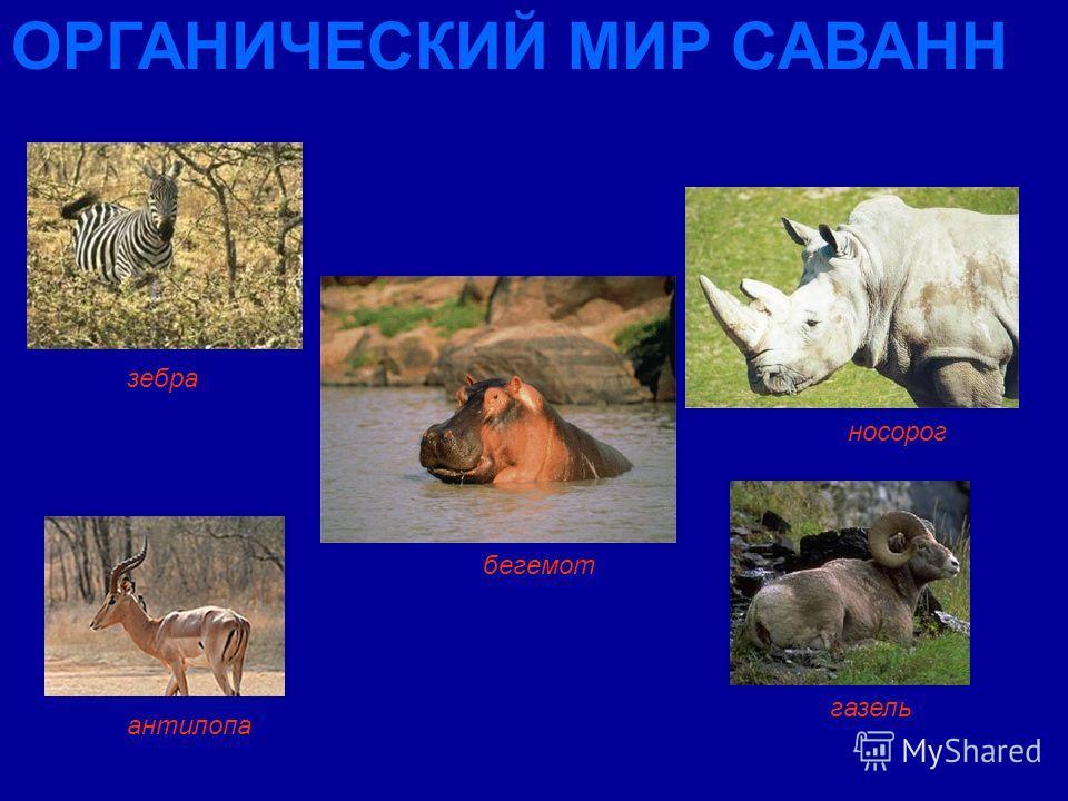 зебра антилопа бегемот газель ОРГАНИЧЕСКИЙ МИР САВАНН носорог