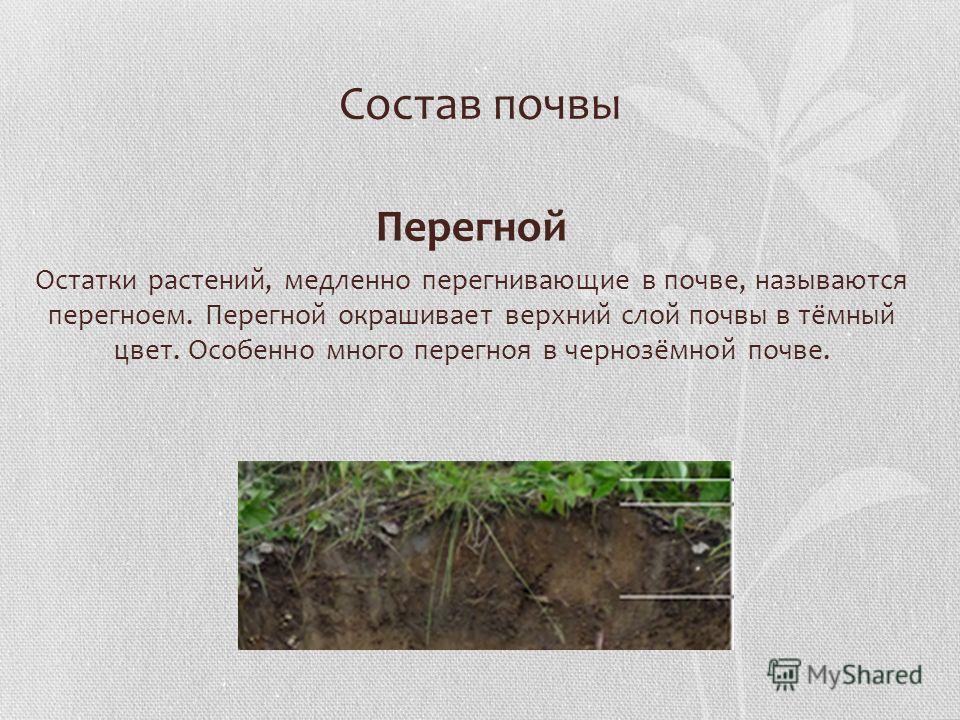 Состав почвы Перегной Остатки растений, медленно перегнивающие в почве, называются перегноем. Перегной окрашивает верхний слой почвы в тёмный цвет. Особенно много перегноя в чернозёмной почве.