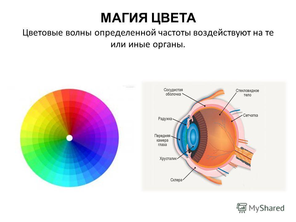 МАГИЯ ЦВЕТА Цветовые волны определенной частоты воздействуют на те или иные органы.