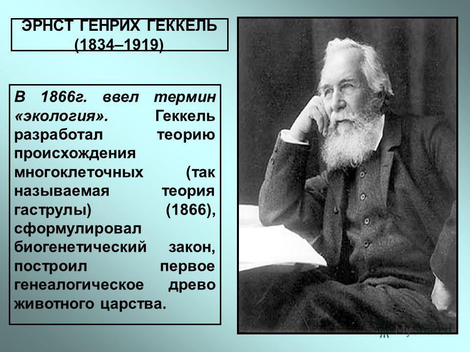 ЭРНСТ ГЕНРИХ ГЕККЕЛЬ (1834–1919) В 1866г. ввел термин «экология». Геккель разработал теорию происхождения многоклеточных (так называемая теория гаструлы) (1866), сформулировал биогенетический закон, построил первое генеалогическое древо животного цар