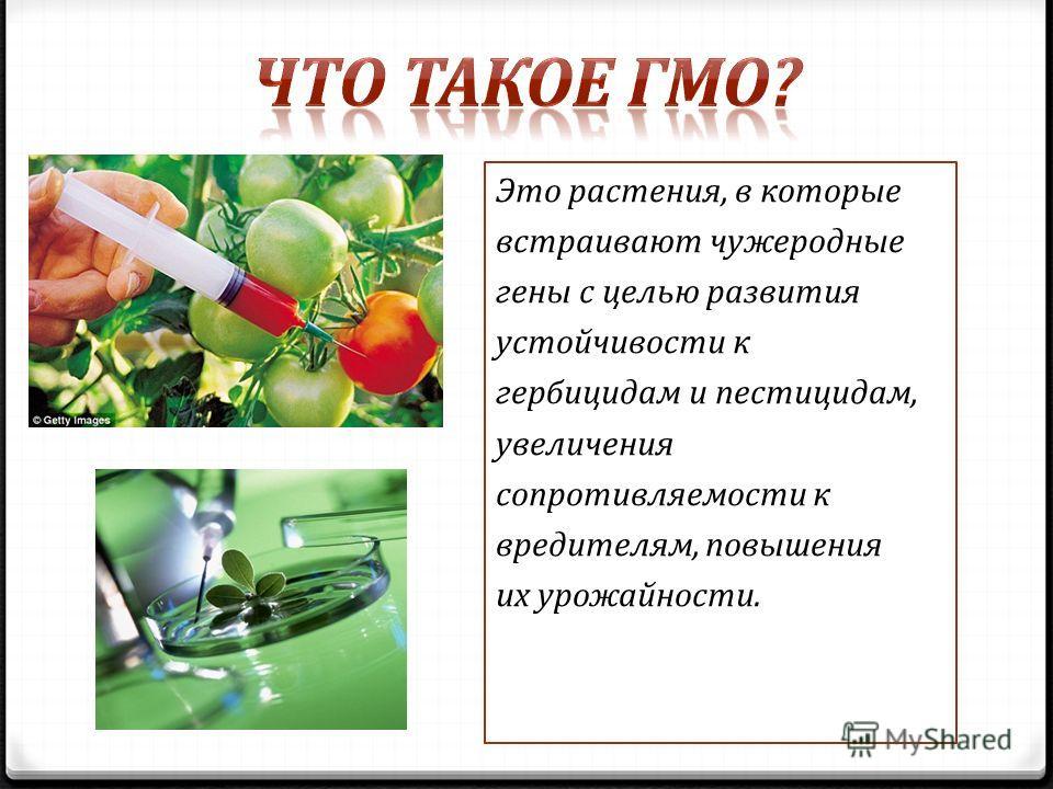 Это растения, в которые встраивают чужеродные гены с целью развития устойчивости к гербицидам и пестицидам, увеличения сопротивляемости к вредителям, повышения их урожайности.