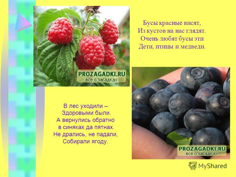 Две сестры летом зелены, К осени одна краснеет, другая чернеет. Много ягод в огороде, Все красны, как на подбор. Собирают все их быстро И кладут скорее в рот.