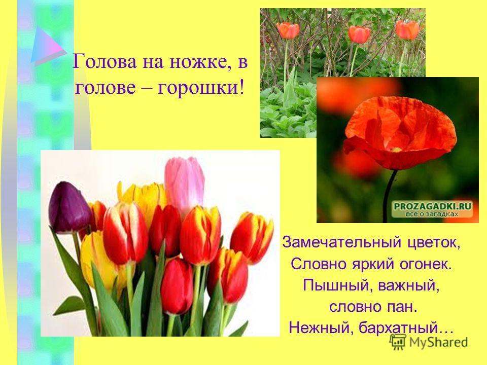 Загадки про растения: Эй, звоночки, синий цвет! С язычком, а звону нет! Цветет он майскою порой: Его найдешь в тени лесной. На стебельке, как бусы в ряд, Цветы душистые висят.