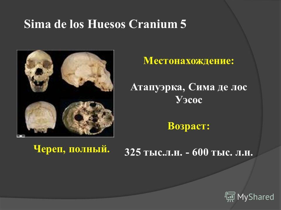 Sima de los Huesos Cranium 5 Череп, полный. Местонахождение: Атапуэрка, Сима де лос Уэсос Возраст: 325 тыс.л.н. - 600 тыс. л.н.