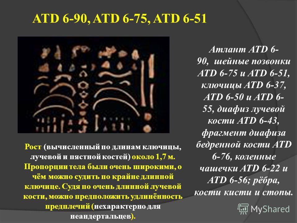 ATD 6-90, ATD 6-75, ATD 6-51 Атлант ATD 6- 90, шейные позвонки ATD 6-75 и ATD 6-51, ключицы ATD 6-37, ATD 6-50 и ATD 6- 55, диафиз лучевой кости ATD 6-43, фрагмент диафиза бедренной кости ATD 6-76, коленные чашечки ATD 6-22 и ATD 6-56; рёбра, кости к