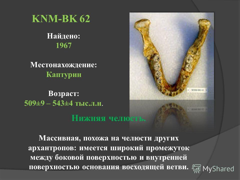 KNM-BK 62 Найдено: 1967 Местонахождение: Каптурин Возраст: 509±9 – 543±4 тыс.л.н. Нижняя челюсть. Массивная, похожа на челюсти других архантропов: имеется широкий промежуток между боковой поверхностью и внутренней поверхностью основания восходящей ве