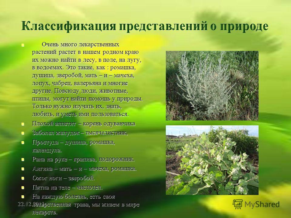 Очень много лекарственных растений растет в нашем родном краю их можно найти в лесу, в поле, на лугу, в водоемах. Это такие, как : ромашка, душица, зверобой, мать – и – мачеха, лопух, чабрец, валерьяна и многие другие. Повсюду люди, животные, птицы,