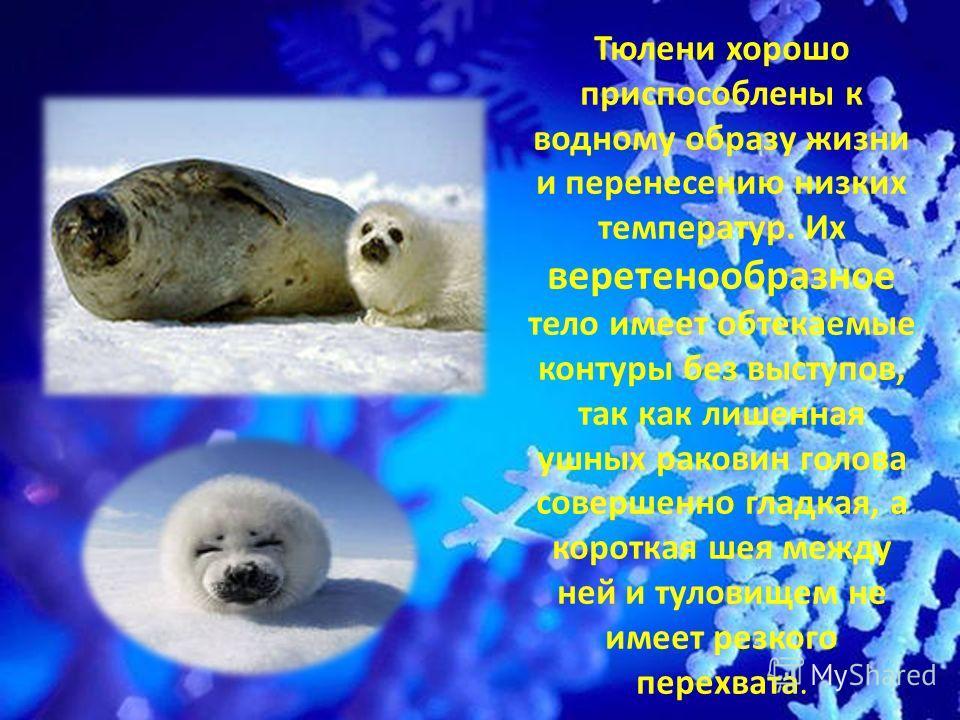 Тюлени хорошо приспособлены к водному образу жизни и перенесению низких температур. Их веретенообразное тело имеет обтекаемые контуры без выступов, так как лишенная ушных раковин голова совершенно гладкая, а короткая шея между ней и туловищем не имее