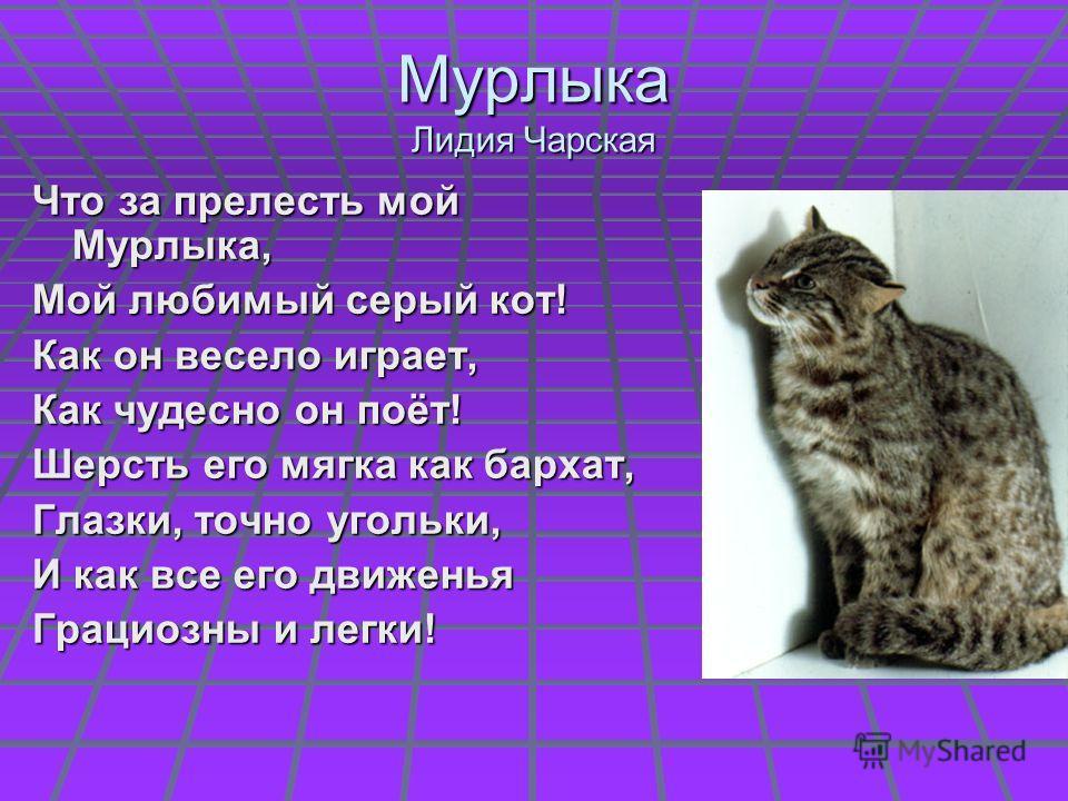 Мурлыка Лидия Чарская Что за прелесть мой Мурлыка, Мой любимый серый кот! Как он весело играет, Как чудесно он поёт! Шерсть его мягка как бархат, Глазки, точно угольки, И как все его движенья Грациозны и легки!