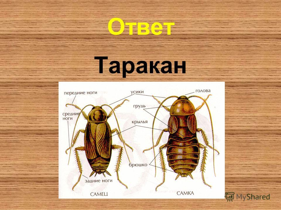Ответ Таракан