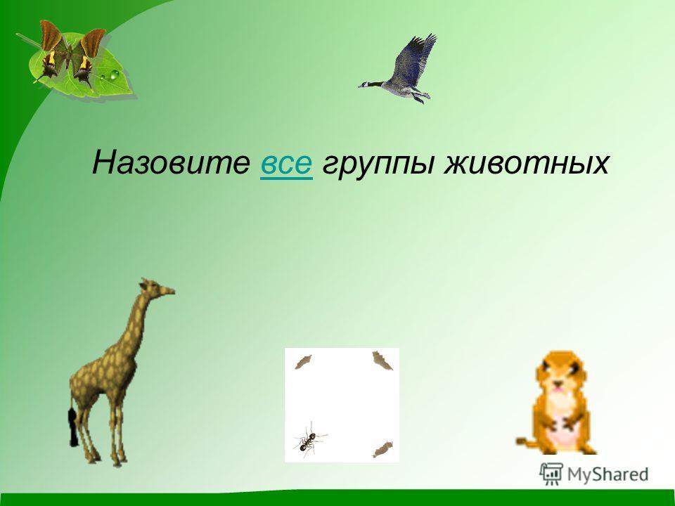 Назовите все группы животныхвсе
