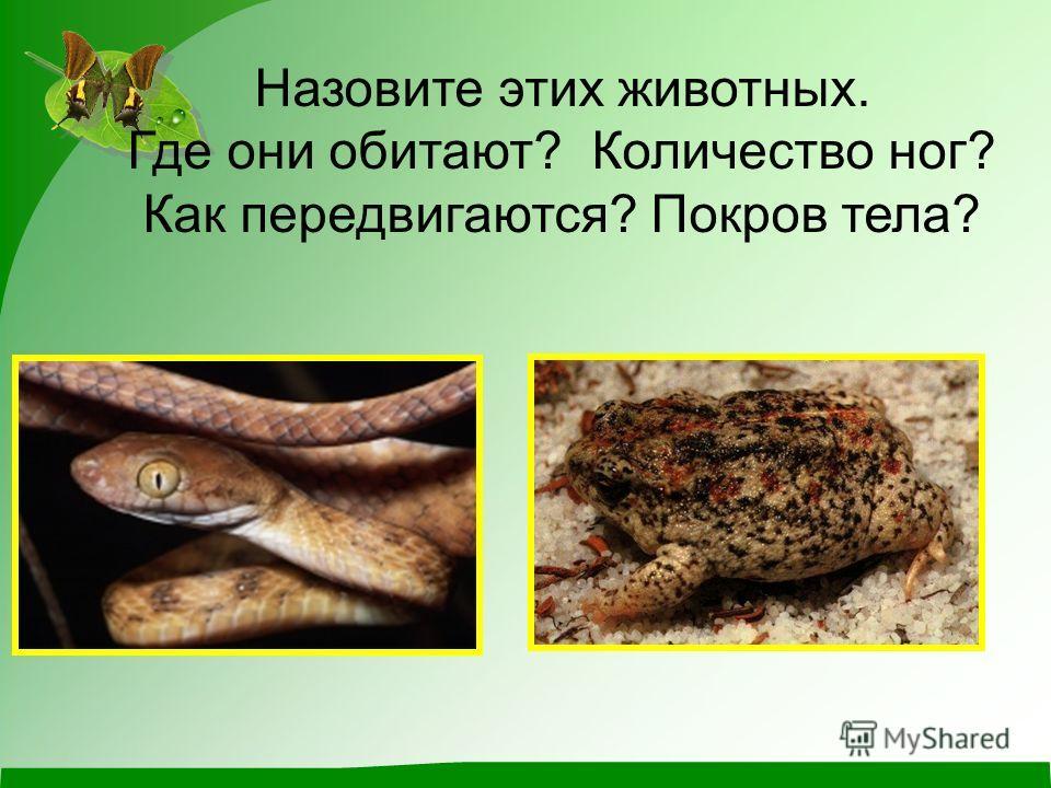 Назовите этих животных. Где они обитают? Количество ног? Как передвигаются? Покров тела?
