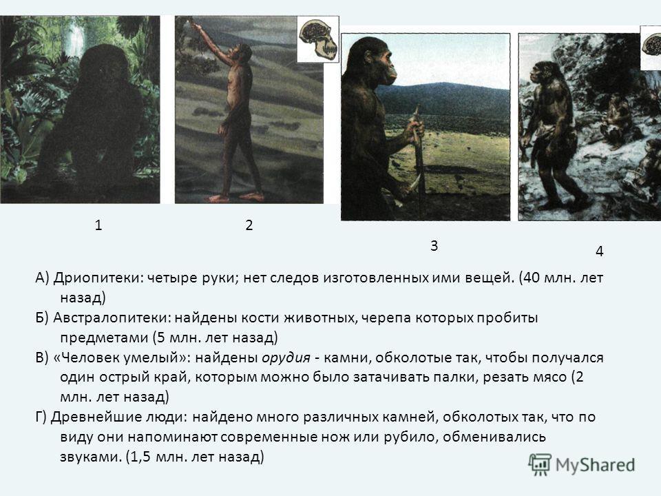А) Дриопитеки: четыре руки; нет следов изготовленных ими вещей. (40 млн. лет назад) Б) Австралопитеки: найдены кости животных, черепа которых пробиты предметами (5 млн. лет назад) В) «Человек умелый»: найдены орудия - камни, обколотые так, чтобы полу