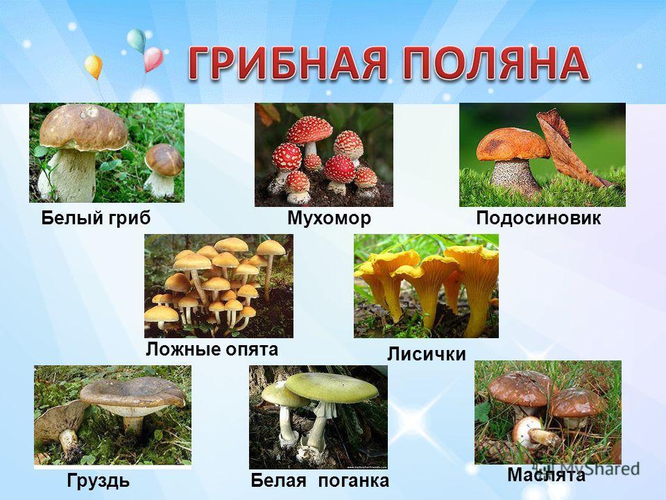 ПодосиновикМухоморБелый гриб Ложные опята Лисички ГруздьБелая поганка Маслята