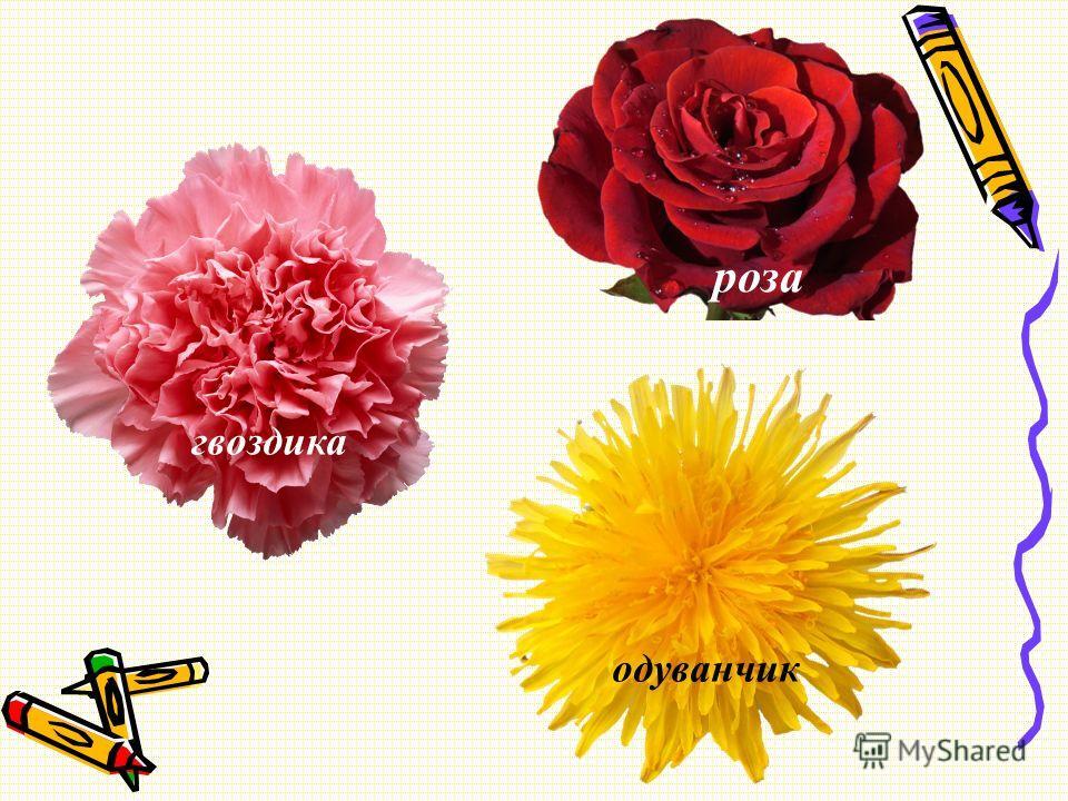 роза одуванчик гвоздика