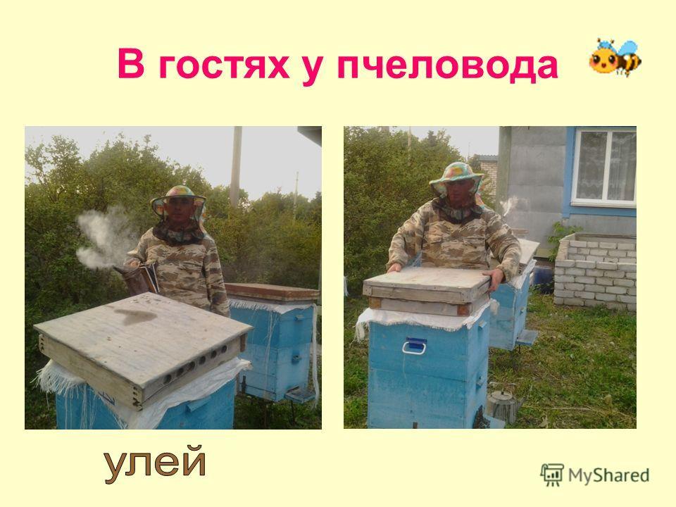 В гостях у пчеловода