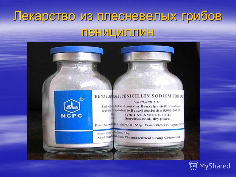 Лекарство из плесневелых грибов пенициллин