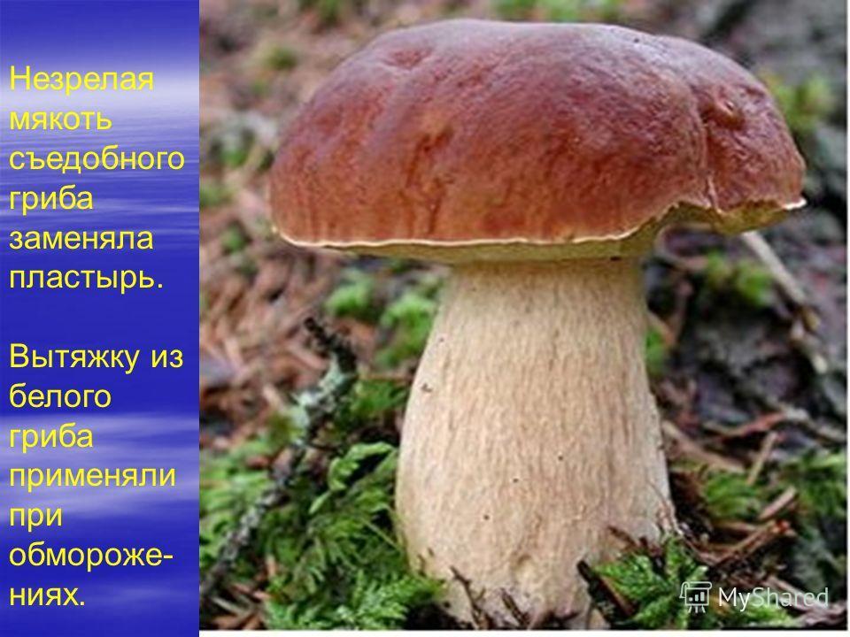 Незрелая мякоть съедобного гриба заменяла пластырь. Вытяжку из белого гриба применяли при обмороже- ниях.