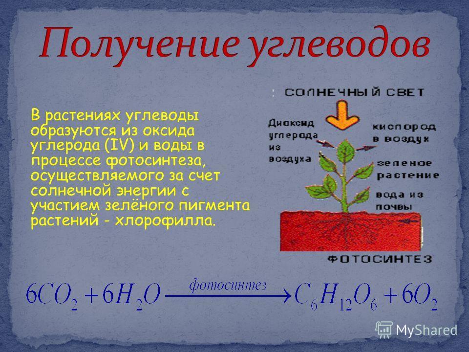 В растениях углеводы образуются из оксида углерода (IV) и воды в процессе фотосинтеза, осуществляемого за счет солнечной энергии с участием зелёного пигмента растений - хлорофилла.