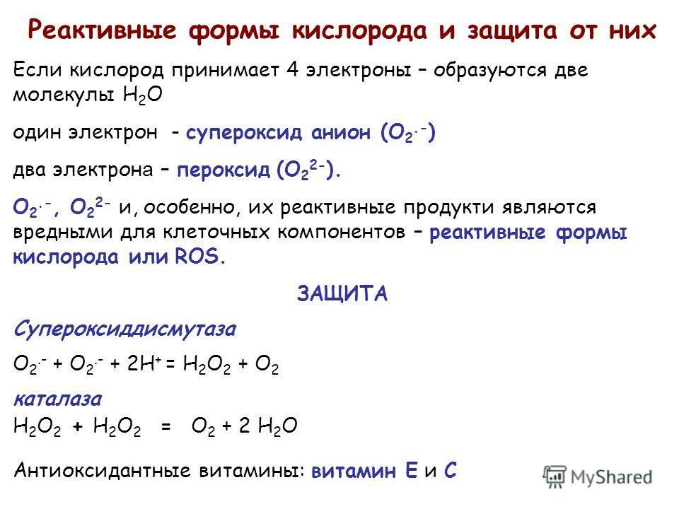 Реактивные формы кислорода и защита от них Если кислород принимает 4 электроны – образуются две молекулы H 2 O один электрон - супероксид анион (O 2.- ) два электрон а – пероксид (O 2 2- ). O 2.-, O 2 2- и, особенно, их реактивные продукти являются в