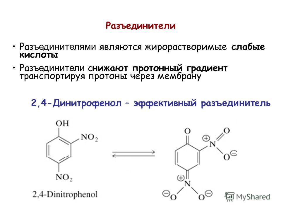 Раз ъединителями являются жирорастворимые слабые кислоты Раз ъединители снижают протонный градиент транспортируя протоны через мембрану Разъединители 2,4-Динитрофенол – эффективный раз ъединит ель