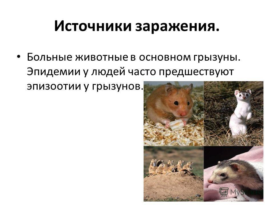 Источники заражения. Больные животные в основном грызуны. Эпидемии у людей часто предшествуют эпизоотии у грызунов.