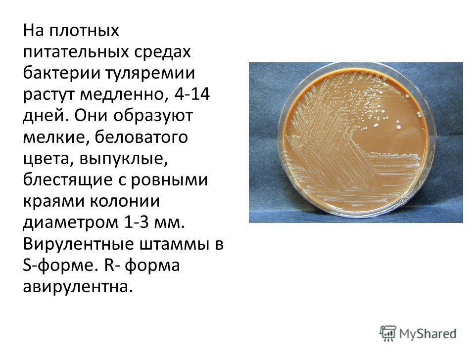 На плотных питательных средах бактерии туляремии растут медленно, 4-14 дней. Они образуют мелкие, беловатого цвета, выпуклые, блестящие с ровными краями колонии диаметром 1-3 мм. Вирулентные штаммы в S-форме. R- форма авирулентна.