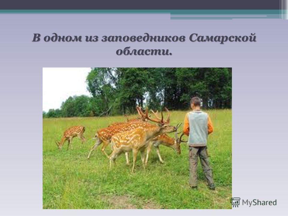 В одном из заповедников Самарской области.