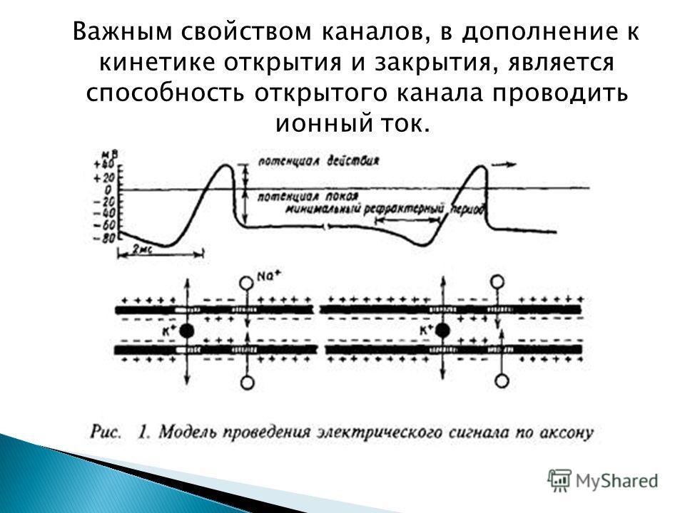 Важным свойством каналов, в дополнение к кинетике открытия и закрытия, является способность открытого канала проводить ионный ток.