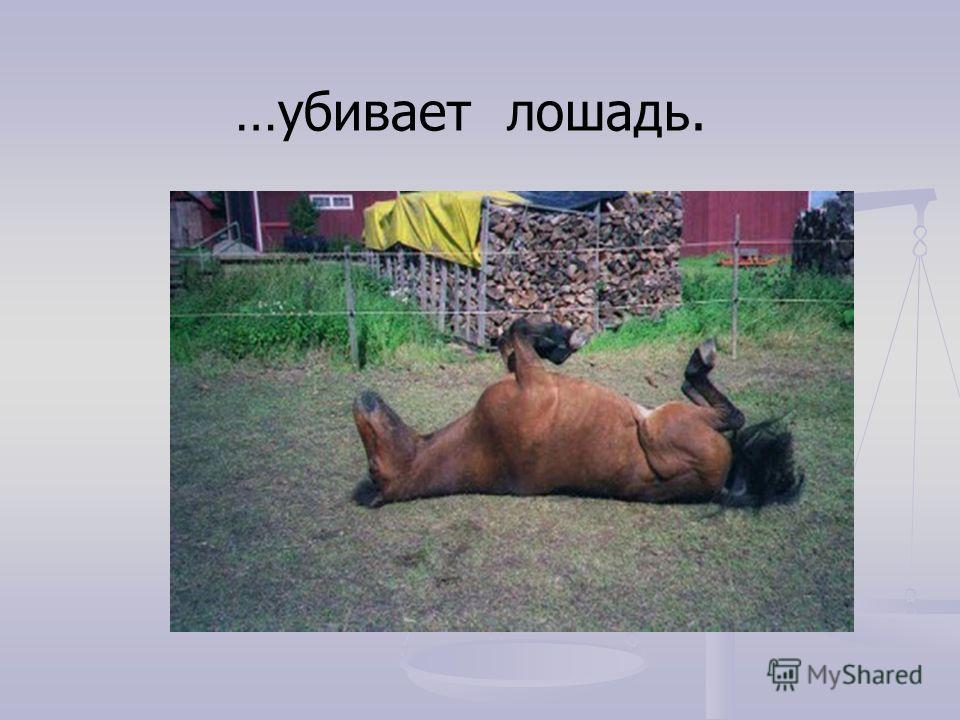 …убивает лошадь.