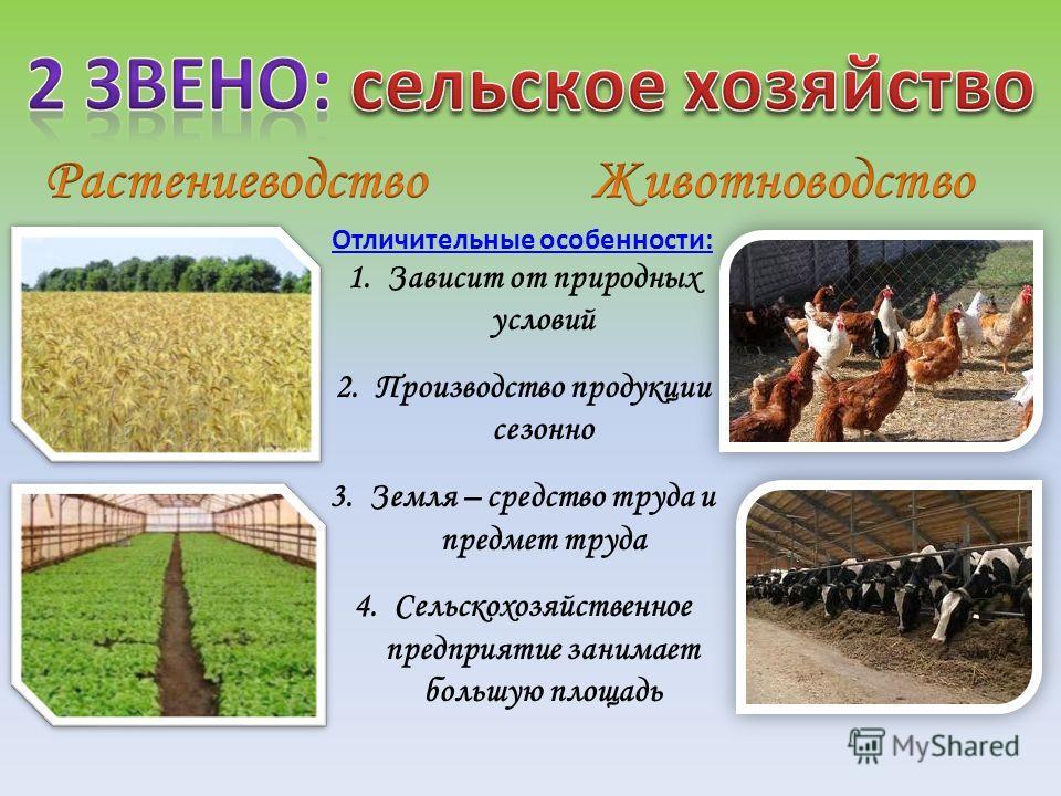 Отличительные особенности: 1.Зависит от природных условий 2.Производство продукции сезонно 3.Земля – средство труда и предмет труда 4.Сельскохозяйственное предприятие занимает большую площадь