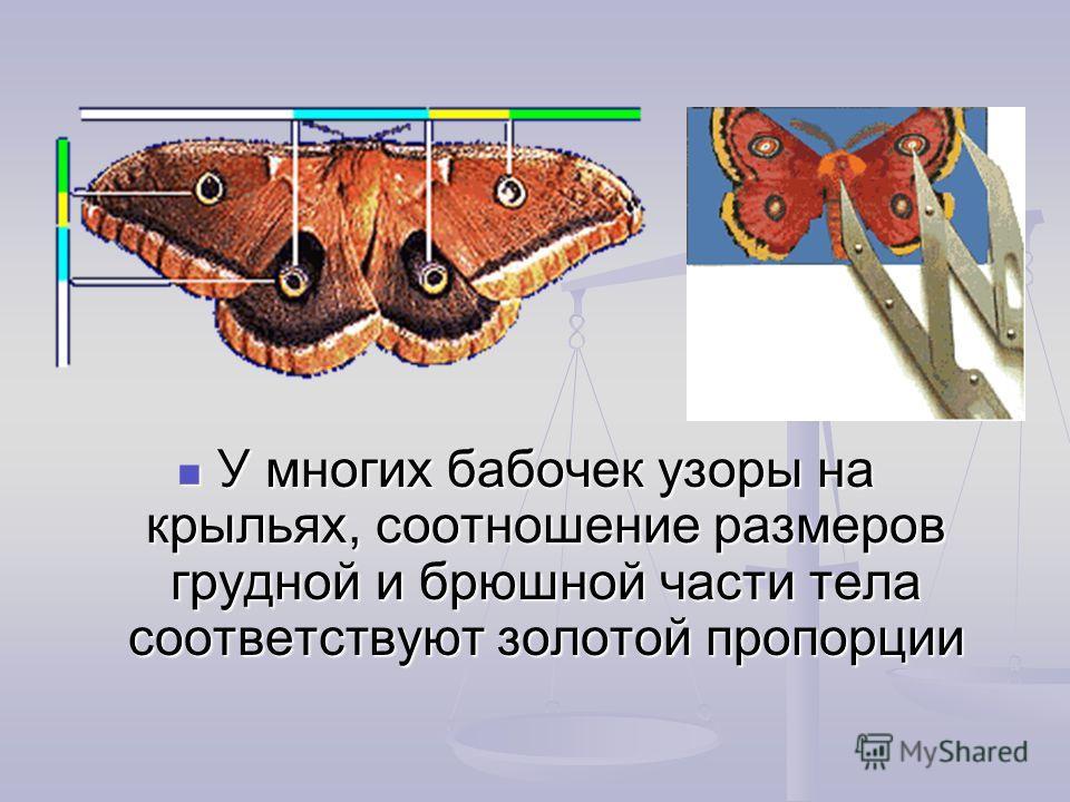 У многих бабочек узоры на крыльях, соотношение размеров грудной и брюшной части тела соответствуют золотой пропорции
