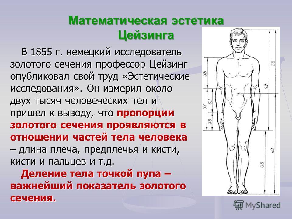 Математическая эстетика Цейзинга В 1855 г. немецкий исследователь золотого сечения профессор Цейзинг опубликовал свой труд «Эстетические исследования». Он измерил около двух тысяч человеческих тел и пришел к выводу, что пропорции золотого сечения про