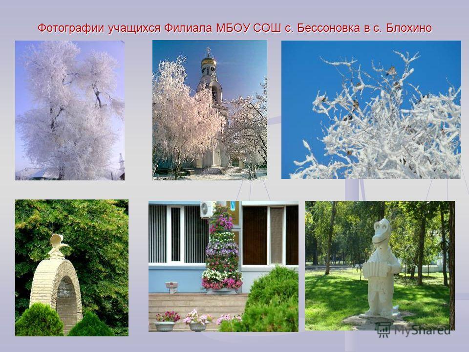 Фотографии учащихся Филиала МБОУ СОШ с. Бессоновка в с. Блохино