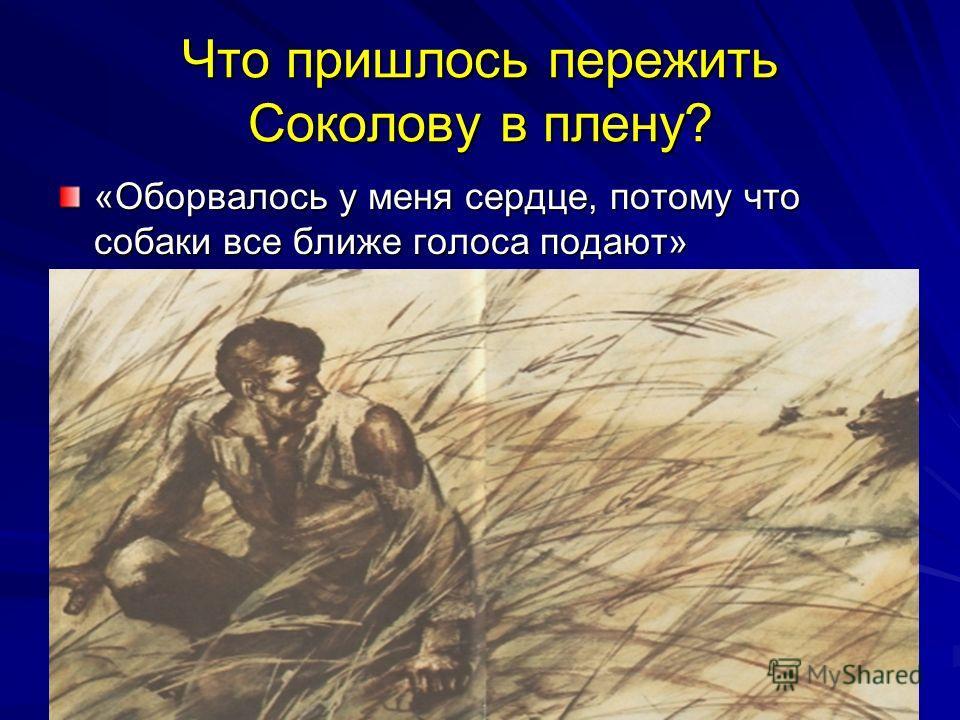 Что пришлось пережить Соколову в плену? «Оборвалось у меня сердце, потому что собаки все ближе голоса подают»