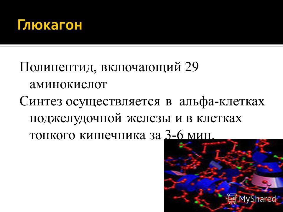 Полипептид, включающий 29 аминокислот Синтез осуществляется в альфа-клетках поджелудочной железы и в клетках тонкого кишечника за 3-6 мин.