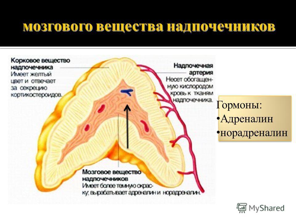 мозгового вещества надпочечников Гормоны: Адреналин норадреналин
