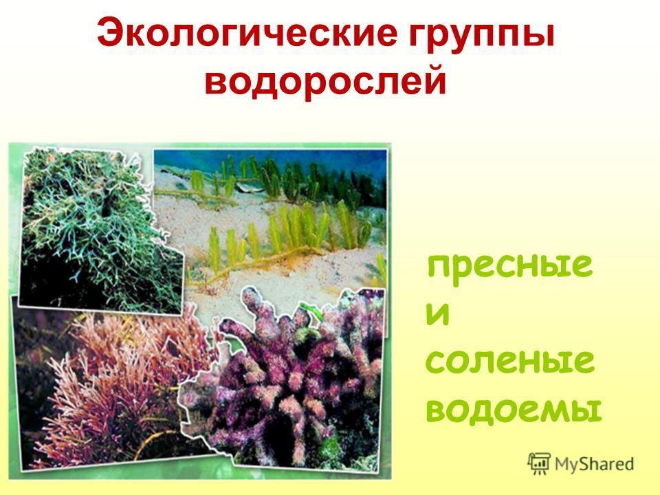 Экологические группы водорослей пресные и соленые водоемы