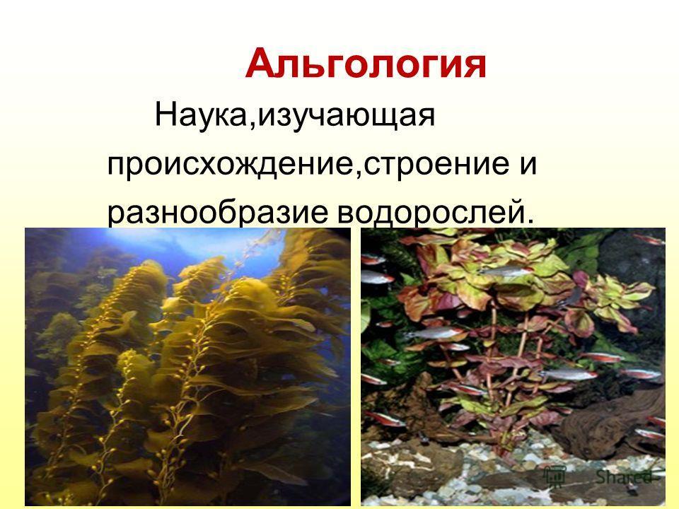 Альгология Наука,изучающая происхождение,строение и разнообразие водорослей.