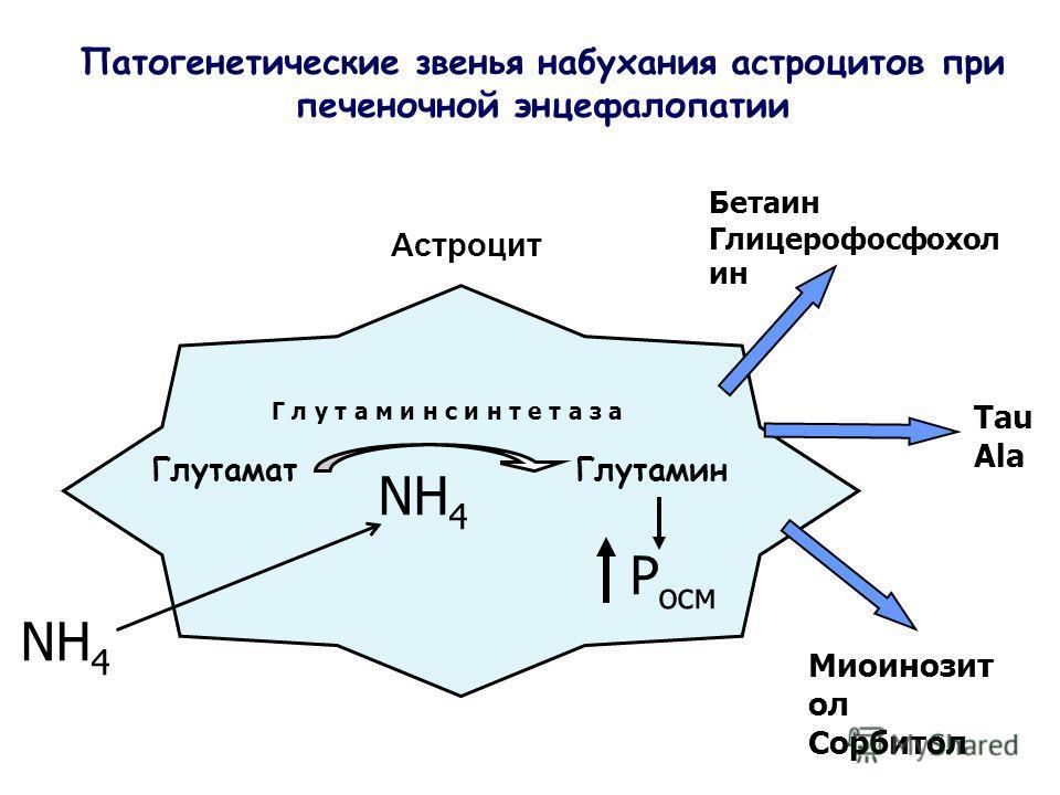 Астроцит Патогенетические звенья набухания астроцитов при печеночной энцефалопатии ГлутаматГлутамин Г л у т а м и н с и н т е т а з а Р осм NH 4 Tau Ala Миоинозит ол Сорбитол Бетаин Глицерофосфохол ин