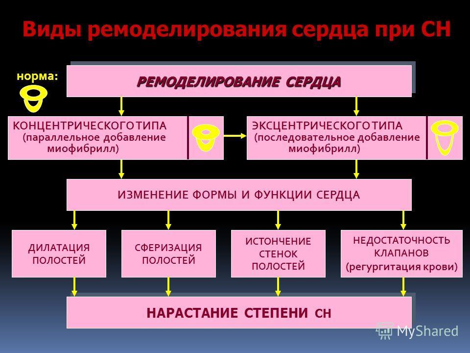 РЕМОДЕЛИРОВАНИЕ СЕРДЦА ИЗМЕНЕНИЕ ФОРМЫ И ФУНКЦИИ СЕРДЦА НАРАСТАНИЕ СТЕПЕНИ СН ДИЛАТАЦИЯ ПОЛОСТЕЙ СФЕРИЗАЦИЯ ПОЛОСТЕЙ НЕДОСТАТОЧНОСТЬ КЛАПАНОВ (регургитация крови) ИСТОНЧЕНИЕ СТЕНОК ПОЛОСТЕЙ норма: КОНЦЕНТРИЧЕСКОГО ТИПА (параллельное добавление миофиб