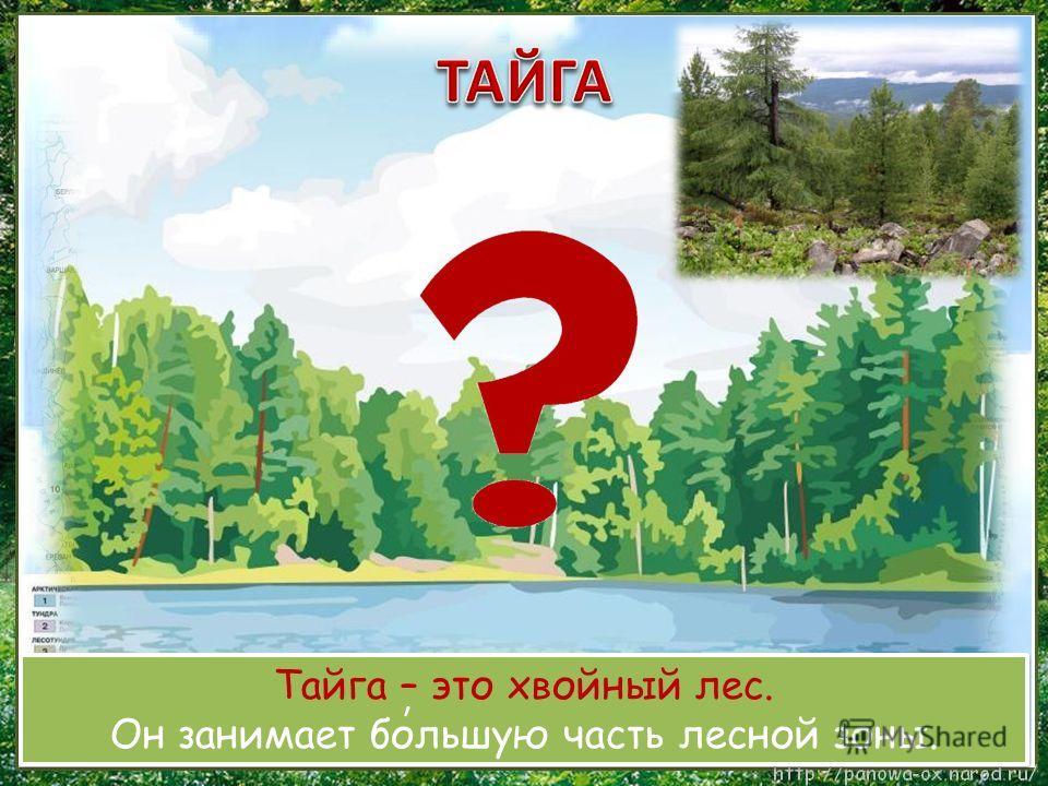 Тайга – это хвойный лес. Он занимает большую часть лесной зоны. Тайга – это хвойный лес. Он занимает большую часть лесной зоны. ʹ