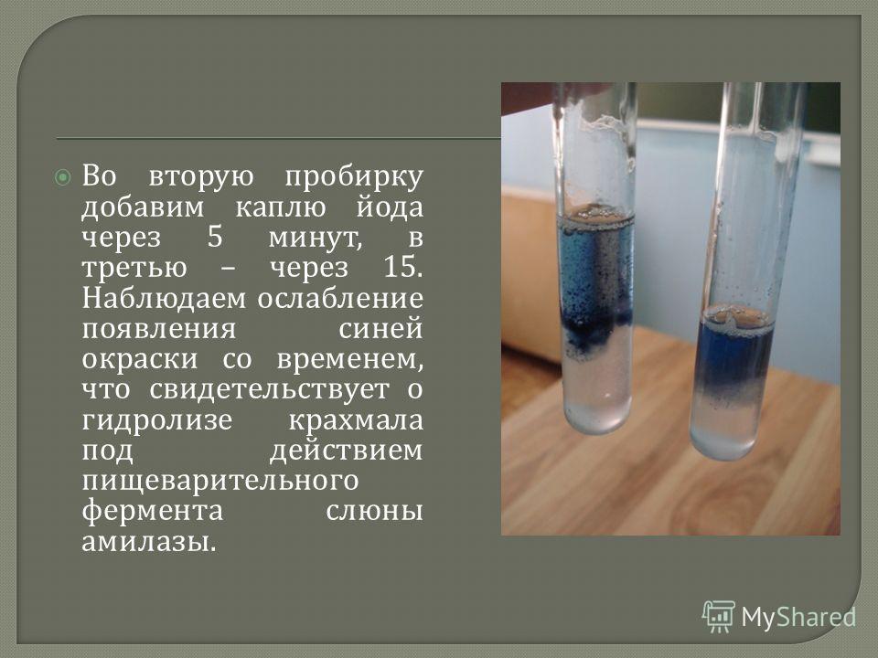 Во вторую пробирку добавим каплю йода через 5 минут, в третью – через 15. Наблюдаем ослабление появления синей окраски со временем, что свидетельствует о гидролизе крахмала под действием пищеварительного фермента слюны амилазы.
