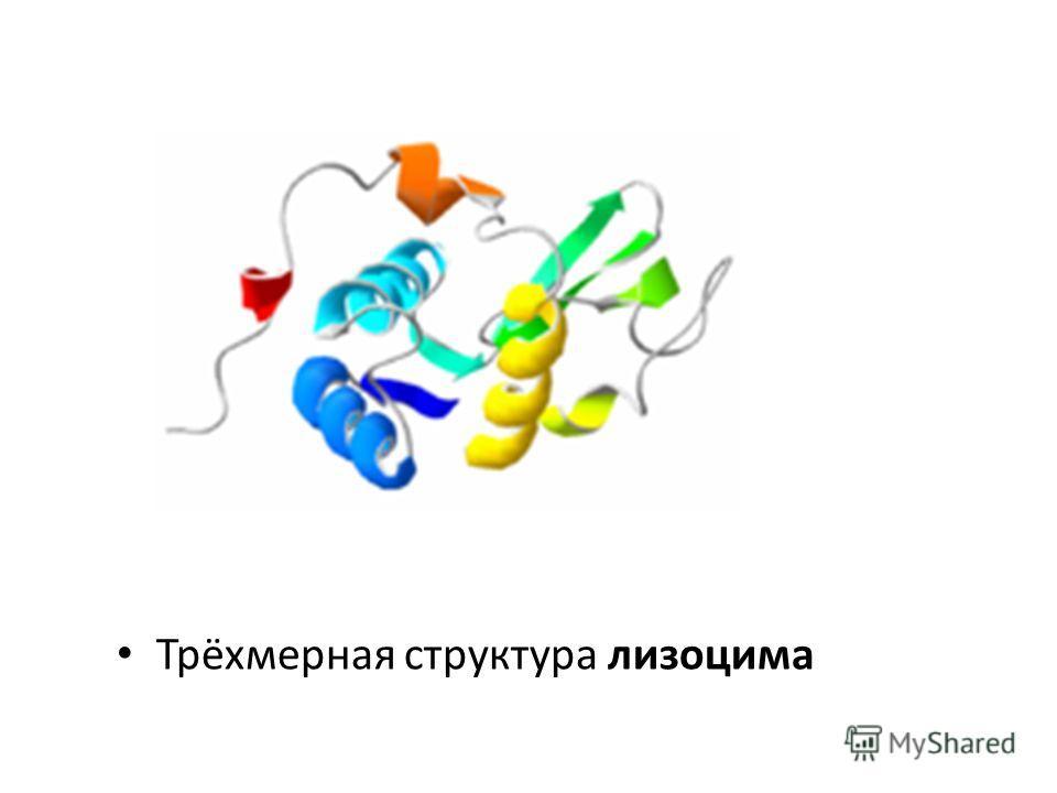 Трёхмерная структура лизоцима
