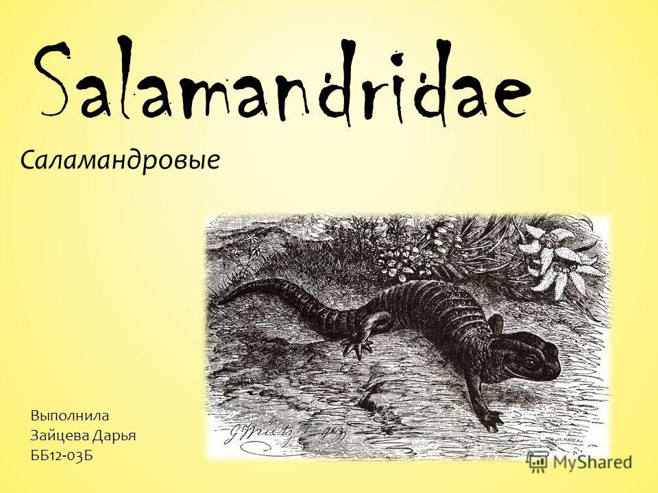 Salamandridae Саламандровые Выполнила Зайцева Дарья ББ12-03Б
