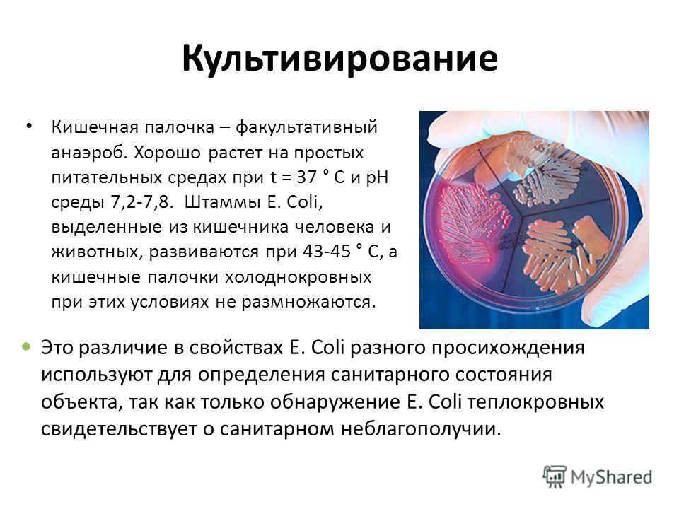 dirka-vlagalishe-foto