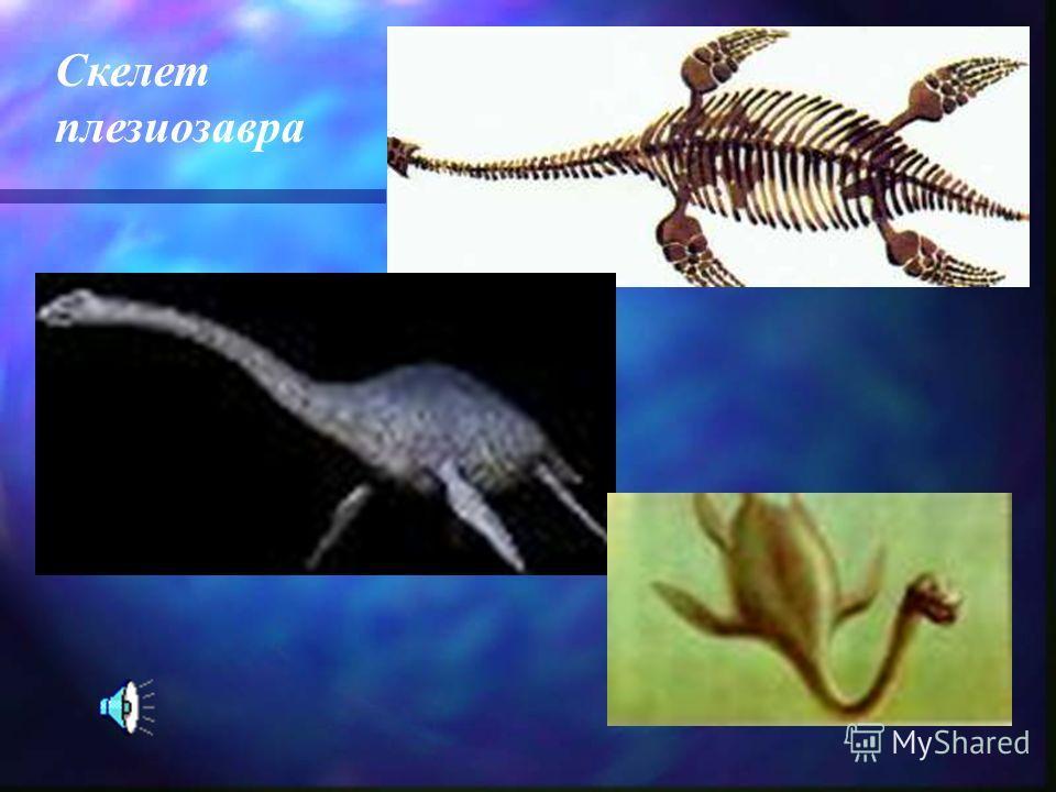 Скелет плезиозавра