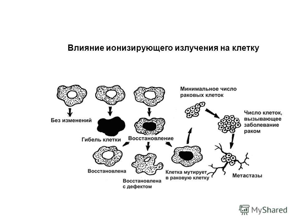 Влияние ионизирующего излучения на клетку